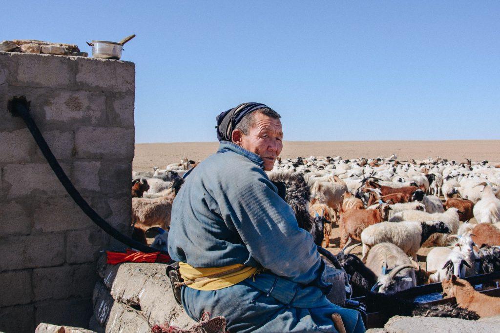 רועה צאן מונגולי