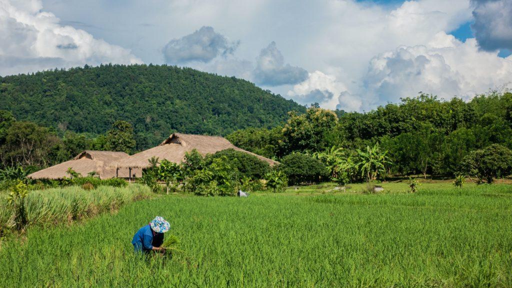 חקלאי עובד בשדות נפאל