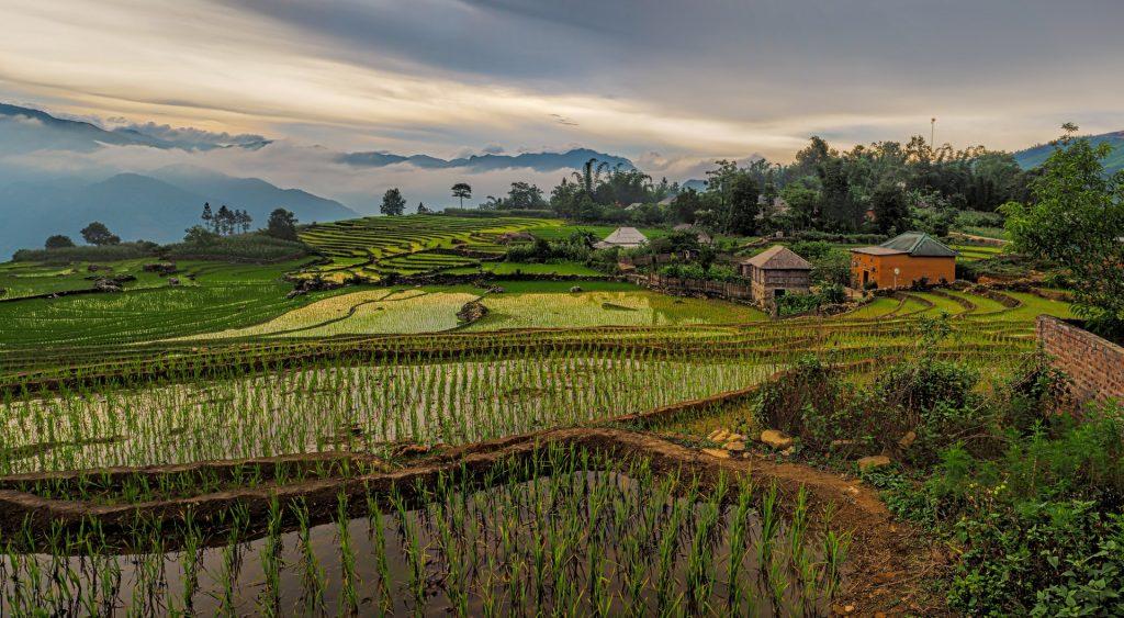 וייטנאם - ויאטנם
