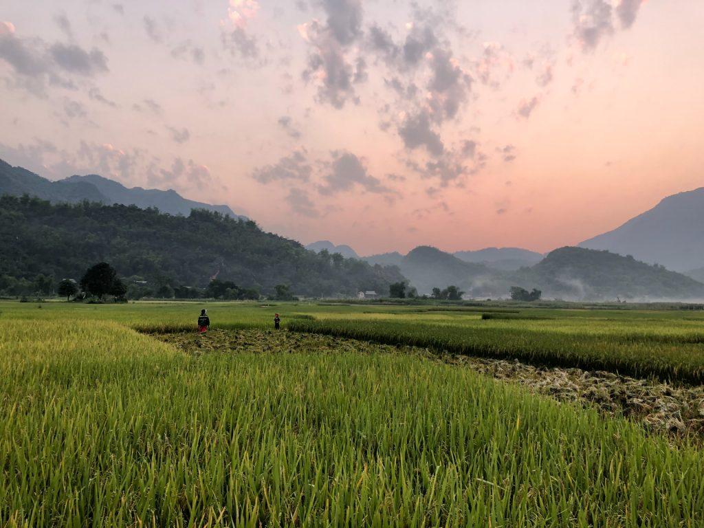 שדות אורז בצפון תאילנד