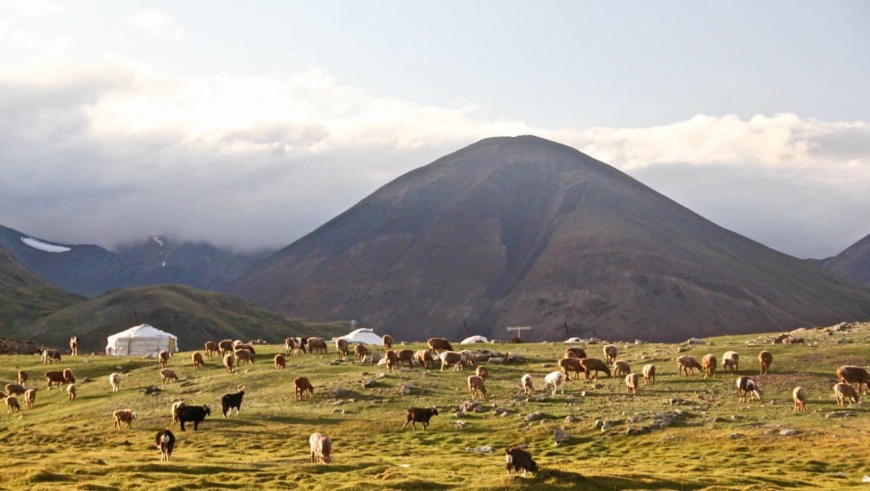 מונגוליה מדריך טיולים מה עושים ועצות חשובות